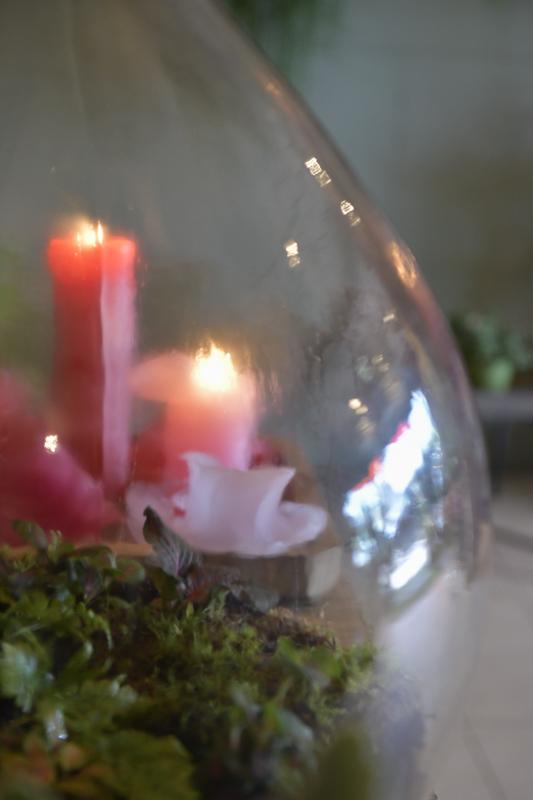 Floribundus bloemen in de Zaanbocht